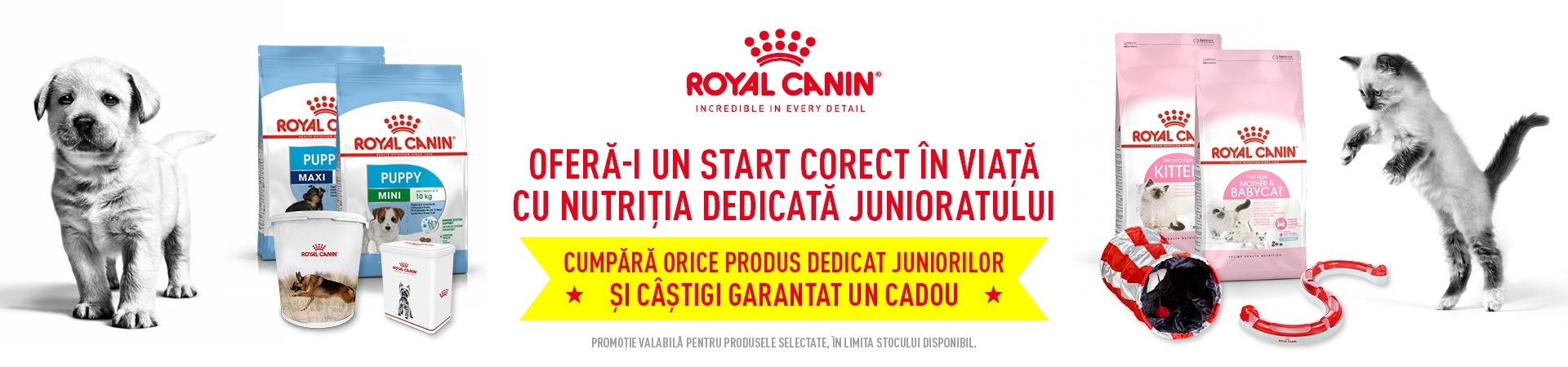 Royal Canin Junior Desktop