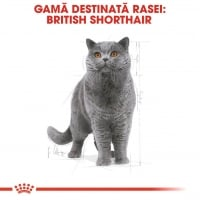 Royal Canin British Shorthair Adult, 2 kg
