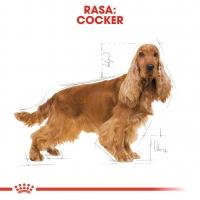 Royal Canin Cocker Adult, 3 kg