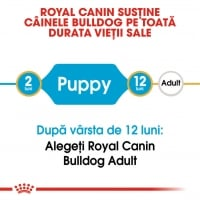 Royal Canin Bulldog Junior, 3 kg