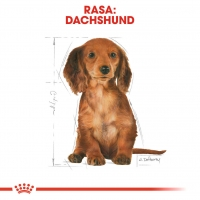Royal Canin Dachshund (Teckel) Junior, 1.5 kg