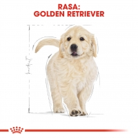Royal Canin Golden Retriever Junior, 1 kg