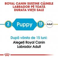 Pachet 2 x Royal Canin Labrador Retriever Junior, 12 kg