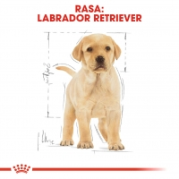 Royal Canin Labrador Retriever Puppy, 1 kg