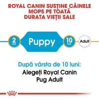 Royal Canin Pug (Mops) Puppy, 1.5 kg