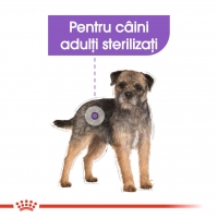 Royal Canin Mini Sterilised, 8 kg