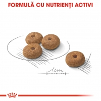 Royal Canin CCN Mini Steril Adult 3 Kg
