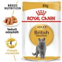 Royal Canin British Shorthair Adult, plic hrană umedă pisici, (în sos), 85g