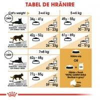 Royal Canin British Shorthair Adult, hrană uscată pisici, 400g