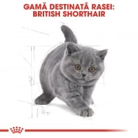 Royal Canin British Shorthair Kitten, 10 kg