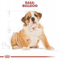 Royal Canin Bulldog Puppy, pachet economic hrană uscată câini juniori, 12kg x 2