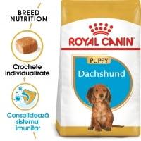 Royal Canin Dachshund Puppy, hrană uscată câini juniori, Teckel, 1.5kg