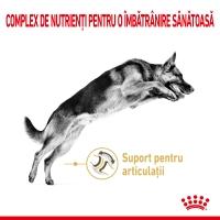 Royal Canin German Shepherd Adult 5+, hrană uscată câini, Ciobănesc German, 12kg