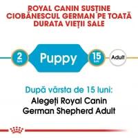 Royal Canin German Shepherd Puppy, hrană uscată câini junior, Ciobănesc German, 12kg