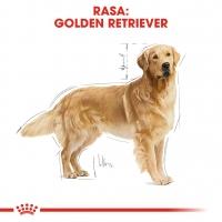 Royal Canin Golden Retriever Adult, hrană uscată câini adulti, 12kg x 2