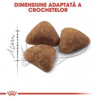 Royal Canin Indoor Adult, pachet economic hrană uscată pisici de interior, 2kg x 2