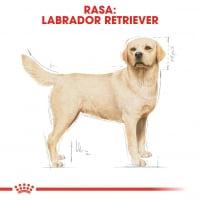 Royal Canin Labrador Adult, hrană uscată câini, 3kg