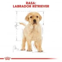 Royal Canin Labrador Puppy, hrană uscată câini junior, 3kg
