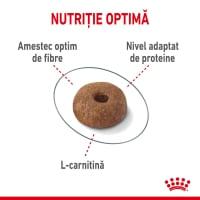 Royal Canin Light Weight Care Adult, hrană uscată pisici, managementul greutății, 8kg