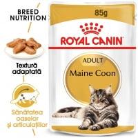 Royal Canin Maine Coon Adult, plic hrană umedă pisici, (în sos), 85g