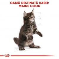 Royal Canin Maine Coon Kitten, hrană uscată pisici junior, 2kg