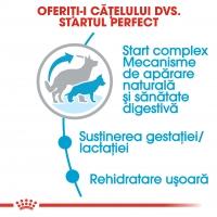 Royal Canin Maxi Starter Mother & BabyDog, mama și puiul, hrană uscată câini, 4kg