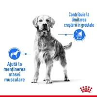Royal Canin Medium Light Weight Care Adult, hrană uscată câini, managementul greutății, 3kg