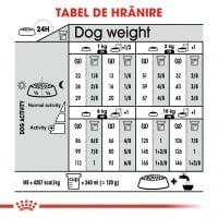 Royal Canin Mini Digestive Care, hrană uscată câini, confort digestiv, 8kg