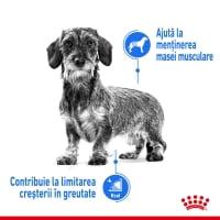 Royal Canin Mini Light Weight Care Adult, hrană uscată câini, managementul greutății, 3kg