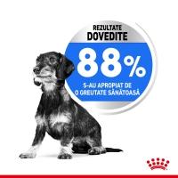 Royal Canin Mini Light Weight Care Adult, hrană uscată câini, managementul greutății, 1kg