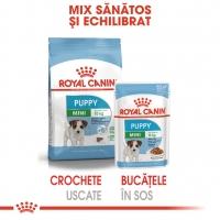 Royal Canin Mini Puppy, bax hrană umedă câini junior (în sos), 85g x 12