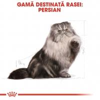 Royal Canin Persian Adult, pachet economic hrană uscată pisici, 10kg x 2