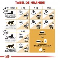 Royal Canin Persian Adult, pachet economic hrană uscată pisici, 2kg x 2