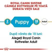 Royal Canin Rottweiler Puppy, hrană uscată câini junior, 12kg