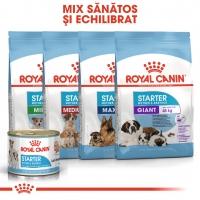 Royal Canin Starter, mama și puiul, conservă hrană umedă câini, (pate) 195g
