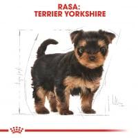 Royal Canin Yorkshire Puppy, hrană uscată câini junior, 500g