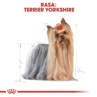 Royal Canin Yorkshire Terrier Adult, bax hrană umedă câini (pate), 85g x 12