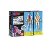 Puzzle de Podea Momki, Corpul uman