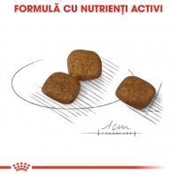 Hrana Royal Canin CCN Mini Coat Care, 1 Kg