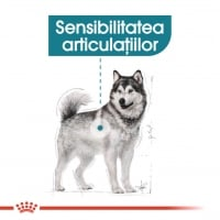 Royal Canin CCN Maxi Joint Care 10 Kg