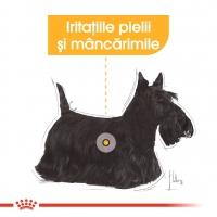 Royal Canin CCN Derma Comfort Loaf, 85 g
