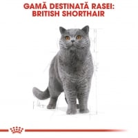 Royal Canin British Shorthair Adult, 10 kg