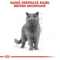 Royal Canin British Shorthair Adult, 85 g