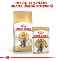 Pachet Royal Canin British Shorthair Adult, 12 x 85 g