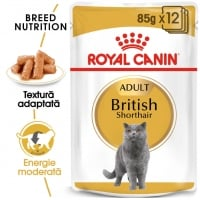 Pachet Royal Canin British Shorthair Adult, 12 x 85 g