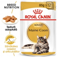 Royal Canin Adult Maine Coon, 85 g