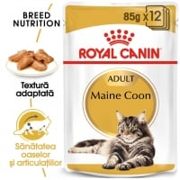 Royal Canin Maine Coon Adult, 12 x 85 g