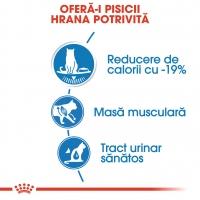 Royal Canin Light Weight Care Adult, bax hrană umedă, managementul greutății, (în aspic), 85g x 12