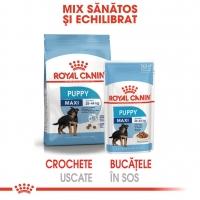 Pachet Royal Canin Maxi Puppy, 10x140 g
