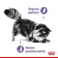 ROYAL CANIN Appetite Control Care, hrană umedă pisici, adult sterilizat, reglarea apetitului, (în sos), 85g
